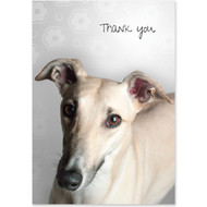 Greyhound Boxed Thank You Notecards