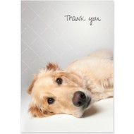 Golden Retriever Boxed Thank You Notecards