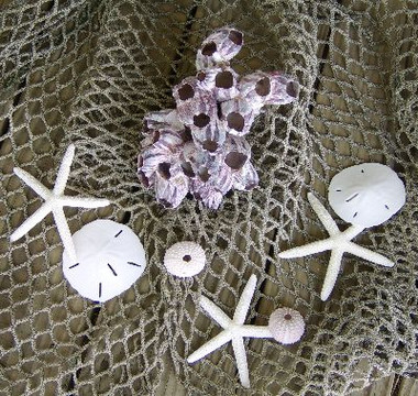 Barnacle & Sea Life Combo with Heavier Fishnet #4172