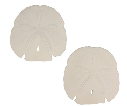Arrowhead Sand Dollars Nautical Seasons