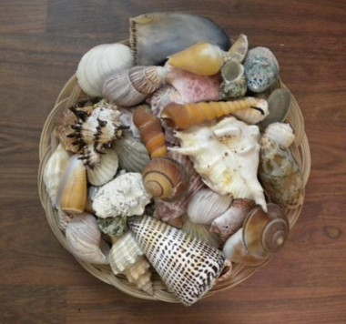 Assorted Sea Shells #4355
