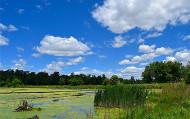 Reducción de Algas del Agua