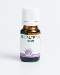 EUCALYPTUS RADIATA  (Eucalyptus radiata) Organic
