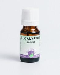 EUCALYPTUS GLOBULUS  (Eucalyptus globulus) Organic