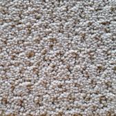 Southwind Carpet Perfect Setting 5812 Fine China