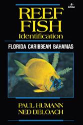Reef Fish Identificationflorida Caribbean Bahamas