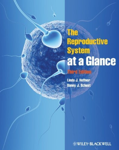 Reproductive System At A Glance