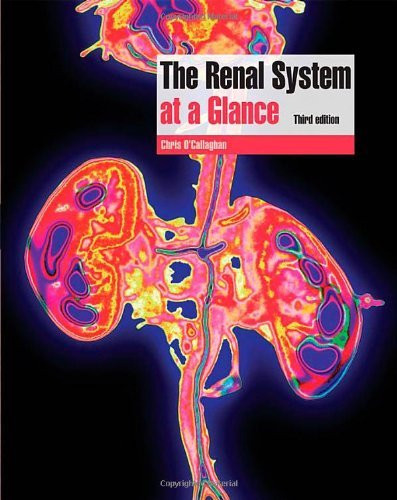 Renal System At A Glance