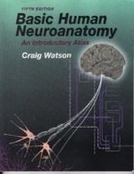 Basic Human Neuroanatomy