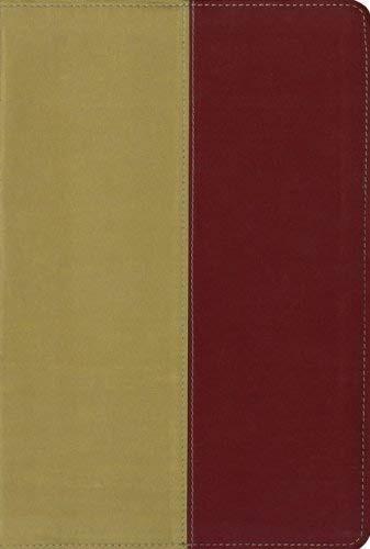 KJV/Amplified Side by Side Parallel Bible