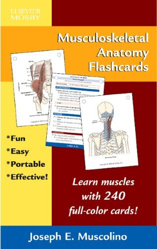 Musculoskeletal Anatomy Flashcards
