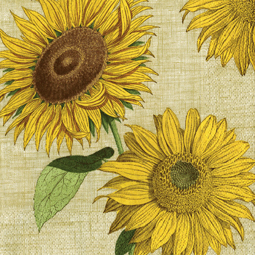 Under the Sun Paper Cocktail Napkins (10710C)