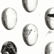 Fowl Play - Fresh Eggs