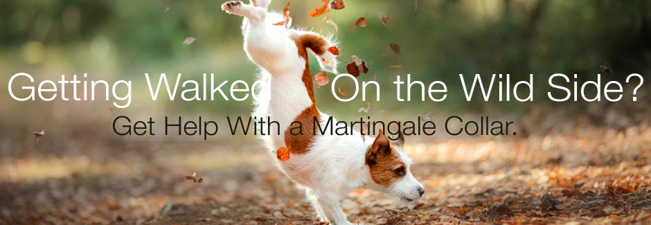 martingale collars for Fall