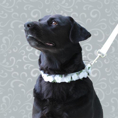 dog models wanted
