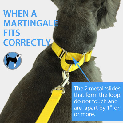 martingale-fit-correctly-400.jpg