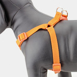 Orange Step In Dog harness, no-choke, adjustable, nylon