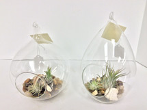 Teardrop and Round Hanging Terrariums