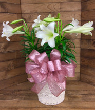 Triple Easter Lily In 12 inch Whitewashed Basket