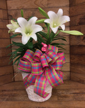 Double Easter Lily in a 10 Inch Whitewashed Basket