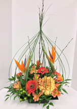 Tropical Birdcage Arrangement