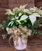"""10"""" Large Poinsettias with Christmas Greens and Fancy Bow"""