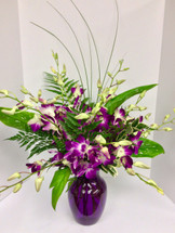 Dendrobium Dream Tropical Vase