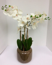 Silk Phalaenopsis Orchid Plant in Ceramic