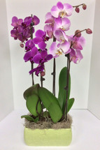 Lovely Phalaenopsis Orchid Ceramic Planter