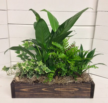 Emerald green garden in rustic wooden box