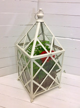 "28"" lattice metal and glass lantern with green and blooming plants"