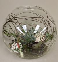 """18"""" Succulant and Airplant Globe Terrarium"""