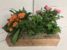 Indoor window box with Blooming and green plants