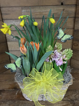 Triple basket of potted spring bulbs and butterflies
