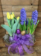 Potted Tulip and Hyacinth Double Basket