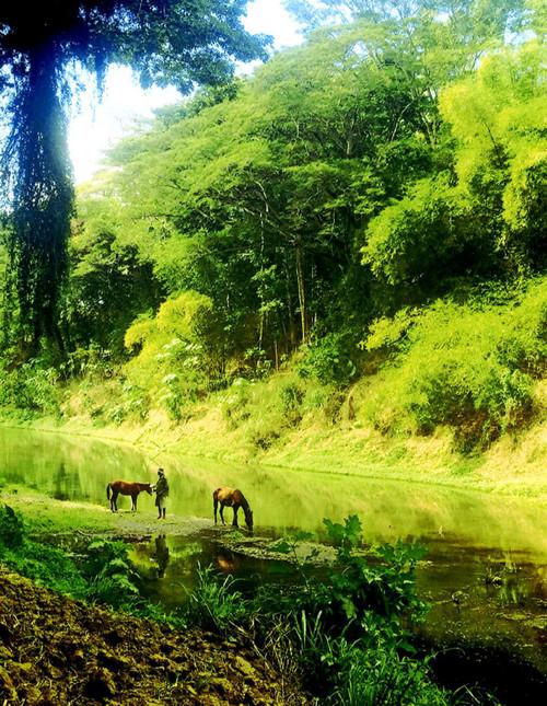 Sablau, Nadi, Fiji  Seru leading the horses down to the river in Sablau  Photo © 2015 Joy Patman
