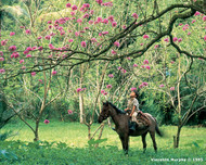Tela, Honduras  In a world of green, a boy pauses his horse to admire a flowering Macuelizo tree in the Lancetilla Botanical Garden in the Caribbean coastal town of Tela.  Photo © 1995 Vincente Murphy; featured in the 2004 International Calendar