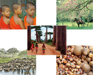Combo Set C includes 2 each of 5 notecards (2 Thailand Notecards, 2 Honduras Notecards, 2 Madagascar Baobabs Notecards, 2 Tanzania Notecards, and 2 Ecuador Gourds Notecards)—a total of 10 cards (with envelopes) for $8.00.