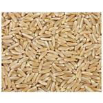 Grains Kamut Berries (1x25LB )