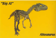 "10 Pack - ""Big Al"" (postcard) (2005)"