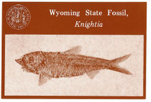 Wyoming State Fossil Knightia (postcard) (1994)