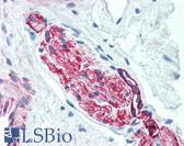 Anti-Nestin Antibody (clone 2C1.3A11) IHC-plus LS-B2851