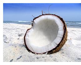 coconutrt.jpg