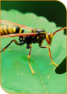 insects-img.png