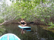 Mangrove Tour (SUP - Kayak)