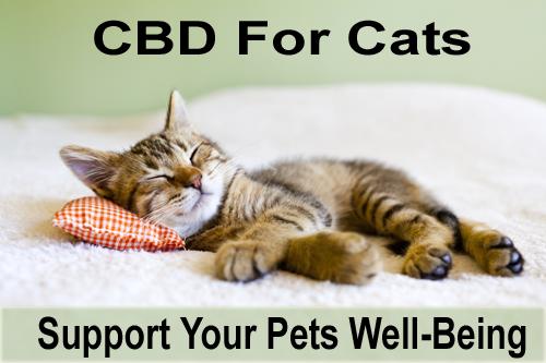 Green Roads World CBD For Cats