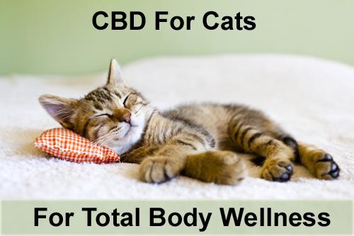 RxCBD | CBD Cat Extract