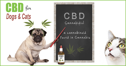 RxCBD - CBD Oils & Treats For Dogs & Cats