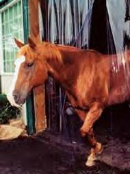 Kleer-Flex Clear Stall/Barn Door Cover Heavy Duty Weight 8ft x 10ft
