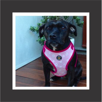 dog-harness-size-large-pink.jpg